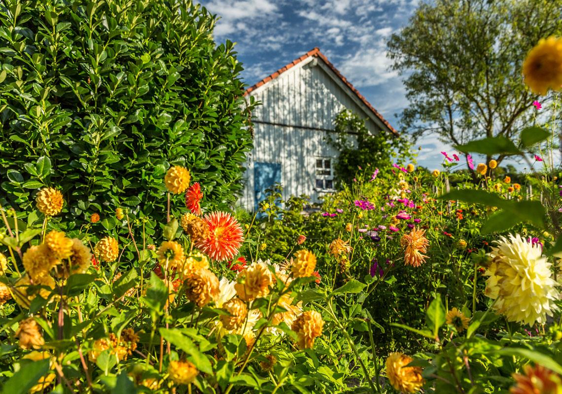 Haus_Blumen